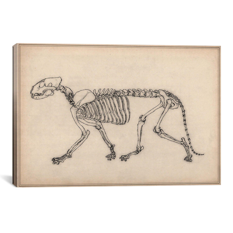 Tiger Skeleton Pictures Animal Art 'tiger Skeleton