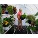 Solexx Harvester 8 Ft. W x 24 Ft. D Polyethylene Greenhouse