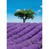 WallPops! Ideal Decor Provence Wall Mural