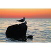 Menaul Fine Art 'Sunset Birds' by Scott J. Menaul Photographic Print on Wrapped Canvas