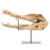 Zentique Alligator Skull with Base Wall Décor
