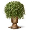 National Tree Co. Argentia Desk Top Plant with Urn