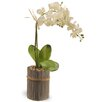National Tree Co. Potted Orchid