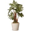 National Tree Co. Philodendron Floor Plant in Pot