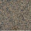 "MS International 18"" x 31"" Polished Granite Tile in Tropic Brown"
