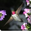 West of the Wind Outdoor Canvas Art Hummingbird Photographic Print on Wrapped Canvas