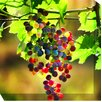 West of the Wind Outdoor Canvas Art Grapes #3 Wrapped Photographic Print on Canvas