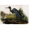 Buyenlarge 'Blue Heron' by John James Audubon Graphic Art