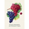 Buyenlarge Northern Muscadine and Delaware Grapes Painting Print