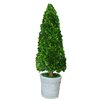Mills Floral Boxwood Cone Topiary in Pot