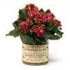 Creative Displays, Inc. Fuchsia Kalanchoe in French Label Pot