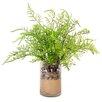 Creative Displays, Inc. Cedar Fern Pot