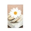 ArtWall 'Daisy and Stones' by Elena Ray Photographic Print on Canvas