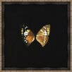 Melissa Van Hise Butterflies VI Framed Art in Black