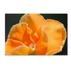 """Trademark Fine Art """"Simple Compassion"""" by Monica Mize Photographic Print on Wrapped Canvas"""