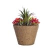 Laura Ashley Home Succulents in Hemp Rope Container