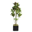 Laura Ashley Home Tall Croton Tree in Planter