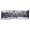 iCanvas Panoramic Bare Trees Photographic Print on Canvas