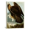 "Canada Goose down replica shop - Trademark Art ""American Flamingo"" by John James Audubon Framed ..."