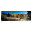iCanvas Panoramic University of Wisconsin Arboretum, Madison, Wisconsin Photographic Print on Canvas