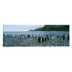 iCanvas Panoramic Colony of King Penguins on the Beach, South Georgia Island, Antarctica Photographic Print on Canvas