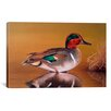 iCanvas Decorative Art 'Green Winged Teal' by Clarence Stewart Graphic Art on Canvas