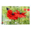 "iCanvas Decorative Art ""Poppies and Butterfly"" by Bill Makinson Graphic Art on Wrapped Canvas"