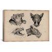 iCanvas Animals Art 'Lion Head Anatomy' by Wilhelm Ellenberger and Hermann Baum Painting Print on Canvas