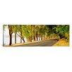 iCanvas Panoramic Trees on Both Sides of a Road, Lake Washington Boulevard, Seattle, Washington State Photographic Print on Canvas