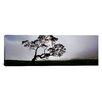 iCanvas Panoramic Mauna Kea, Kamuela, Big Island, Hawaii Photographic Print on Canvas