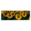 iCanvas Panoramic Sunflowers ND Photographic Print on Canvas