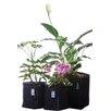 Geopot Square Planter Box