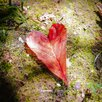 Evive Designs 'I Heart the Woods' by Jennifer Lee Photographic Print