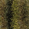 Chandra Rugs Kubu Green Area Rug