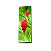 Lamp-In-A-Box Red Ginger by Sean Davey Photographic Print