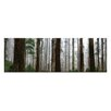Artist Lane Elderly Giants, Dandenong Ranges by Andrew Brown Wrapped Photographic Print on Canvas