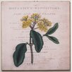 Elizabeth Lucas Company Botanist's Repository Two Vintage Advertisement on Canvas