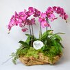 TC Floral Company Orchid and White Geode in Wood Bowl