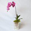 TC Floral Company Orchid in Vintage Mercury Glass