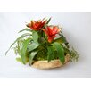 TC Floral Company Exotic Bromeliad in Wood Bowl