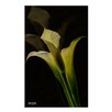 Ready2hangart 'Lilly 2' by Bruce Bain Photographic Printt on Wrapped Canvas