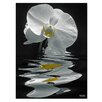 Ready2hangart 'White Orchid ' by Bruce Bain Photographic Printt on Wrapped Canvas