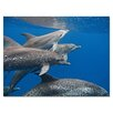 Ready2hangart 'Dolphin' by Christopher Doherty Framed Photographic Printt