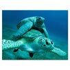 Ready2hangart 'Turtle' by Christopher Doherty Framed Photographic Printt