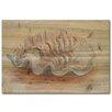 WGI-GALLERY Sea Shell 3 Painting Print on Wood