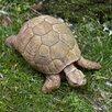Campania International Turtle Statue