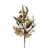 Shea's Wildflowers Rhode Island Wood Rose Bush