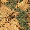 """Albero Valley 11-7/8"""" Cork Hardwood Flooring in Burl with Green Tones"""