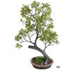 Gold Eagle USA Mini Ficus and Moss Tree in Planter