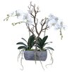 Gold Eagle USA Phalaenopsis Orchid Plant with Branch in Planter